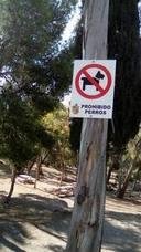 Los perros son bienvenidos en Castala
