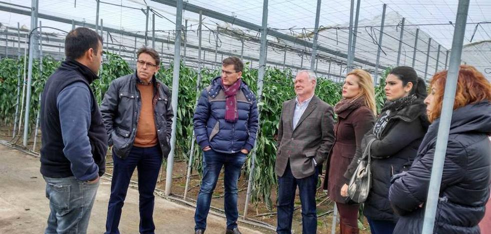 El PSOE reivindica ayudas para los agricultores afectados por el tornado en Adra