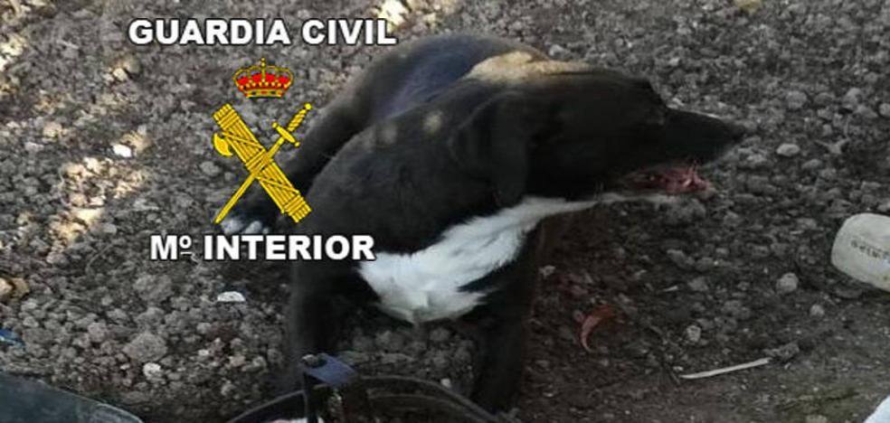 Investigado un vecino de Alcalá la Real por colocar cepos en su huerto urbano