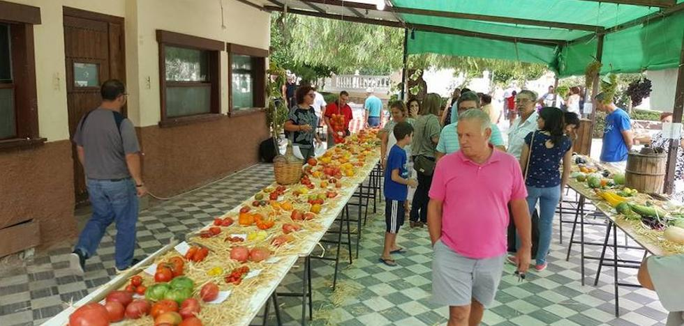 Tíjola celebra la I Feria de la Agricultura dedicada esta edición al tomate
