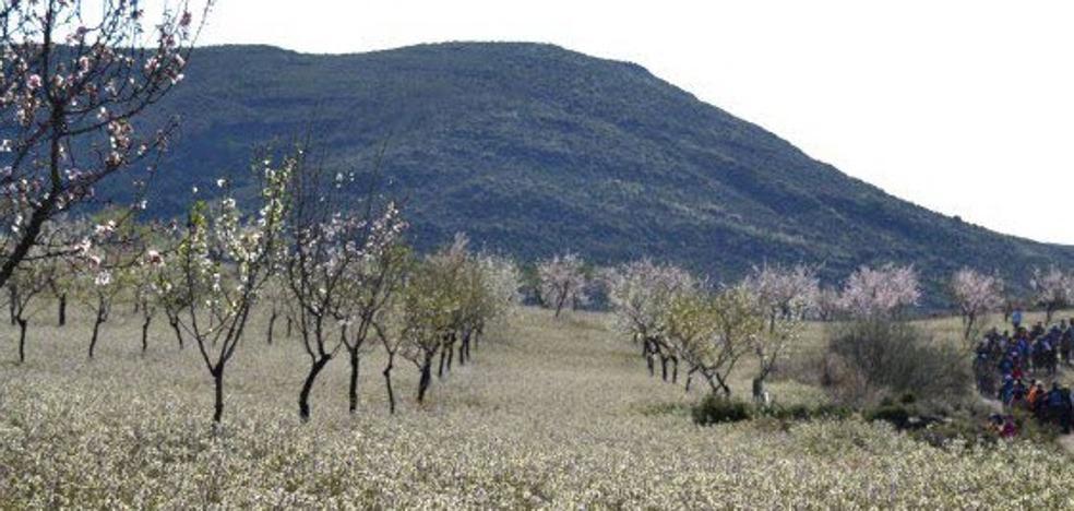 """Demandan un """"riego de socorro para salvar"""" cuatro millones de árboles frutales"""