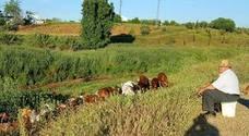 Las lluvias alivian la situación del campo pero retrasan la siembra