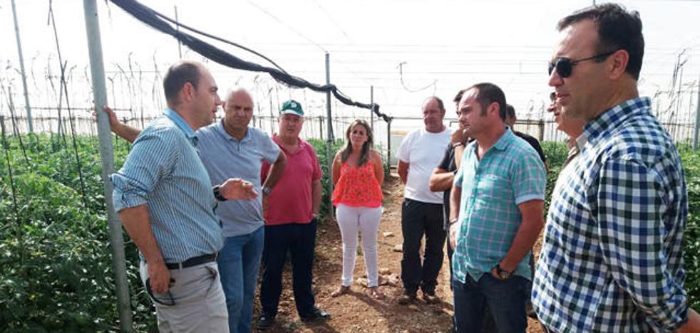 La tormenta de granizo del lunes daña el 40% del tomate cherry en Zújar y Freila