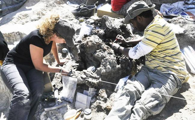 Nuevas excavaciones en Baza descubren restos y fósiles de animales gigantes