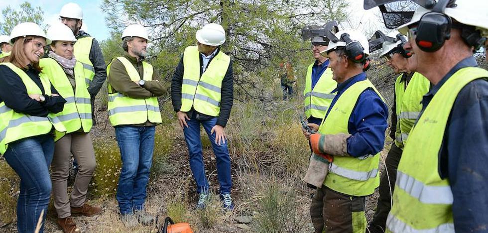 La Junta invierte tres millones de euros contra el decaimiento del pino en la Sierra de Baza