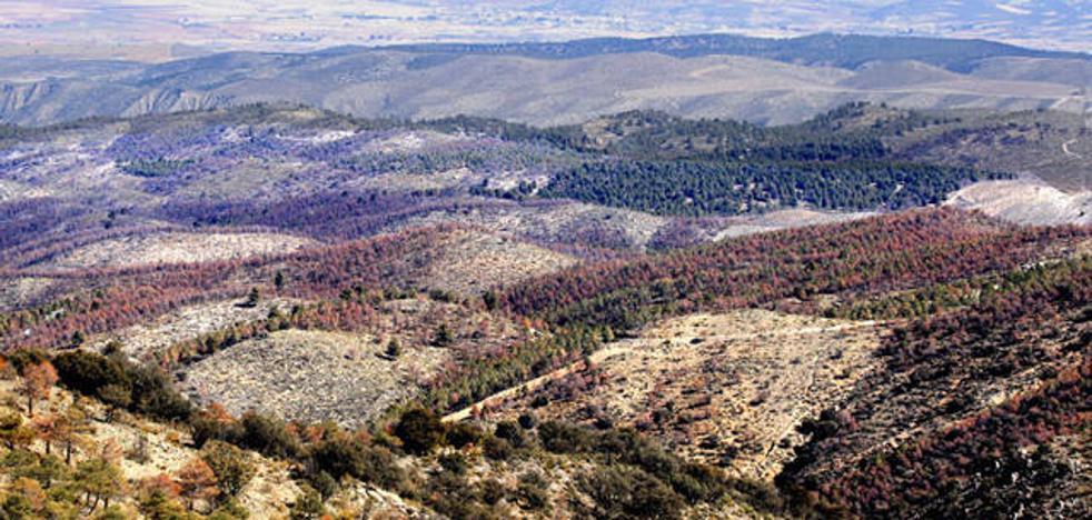 Critican por insuficientes las medidas para detener las plagas en la Sierra de Baza