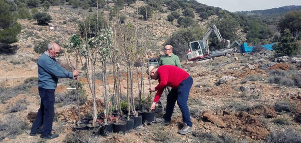 La Asociación Proyecto Sierra de Baza celebra el Día del Bosque