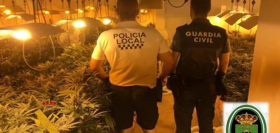 Detenidas dos personas acusadas de cultivar 621 plantas de marihuana en un sótano de Almerimar