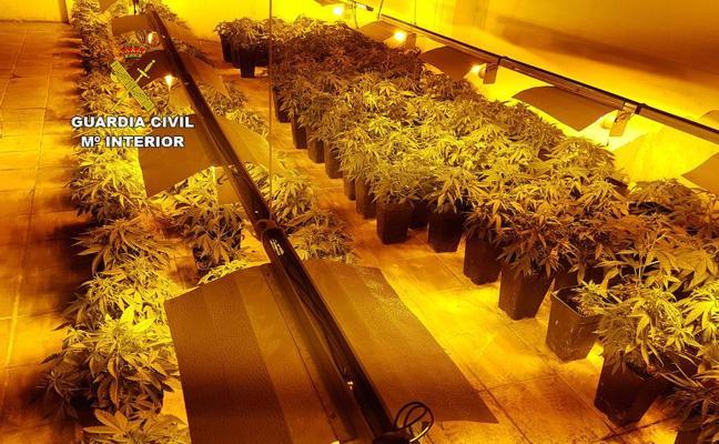 Hallan un cultivo de marihuana en el sótano de un gimnasio de El Ejido