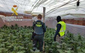 La Guardia Civil localiza en El Ejido más de 850 plantas de marihuana