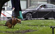 El Ejido contrata a una empresa para tomar 200 muestras de ADN en heces de perros
