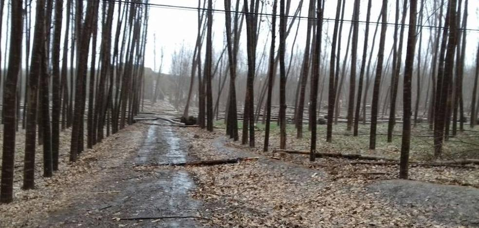 Troncos caídos y apagones en la comarca de Guadix por el temporal