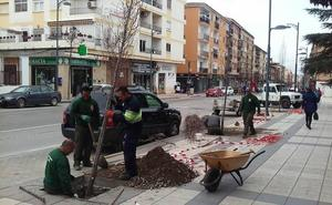 Empiezan los trabajos de reposición de arbolado en la Avenida Medina Olmos