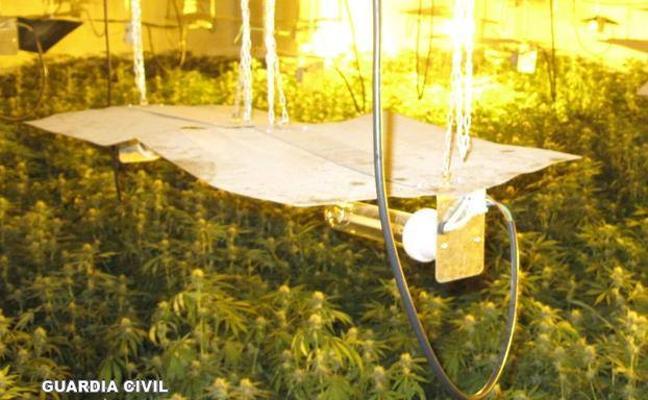 Hallan mil plantas de marihuana en un chalet de Los Rebites