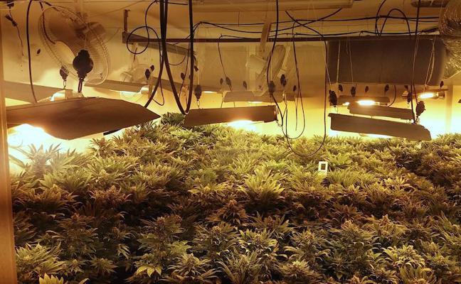 Hallan 760 plantas de marihuana en una vivienda de Huétor Vega