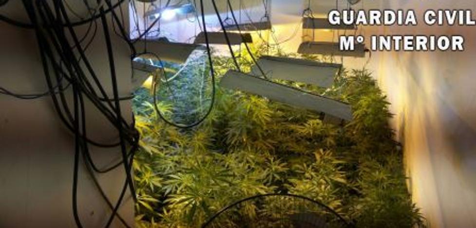 Detenida una mujer e investigado su marido por cultivar 250 plantas de marihuana en un piso en Cuevas del Almanzora