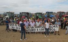 Adif propone reducir en 157 hectáreas el área de reserva de tortuga mora en las obras del AVE con Murcia