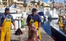 Investigan a un furtivo por capturar un tiburón