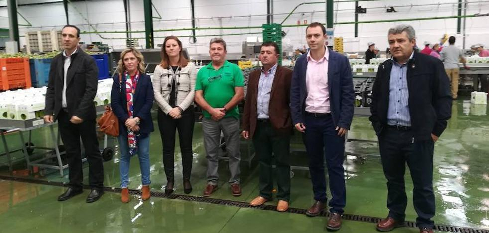 Cooperativas de espárrago reciben más de 530.000 euros de la Junta para incentivar la modernización del sector