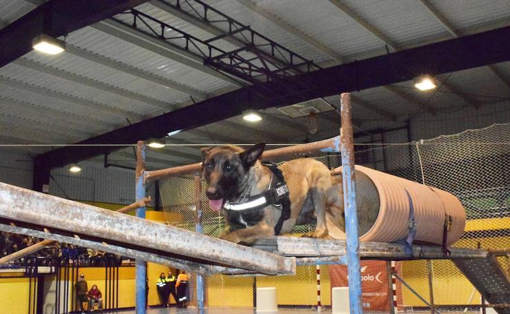 II Exhibición de Unidades Caninas 'Ciudad de Loja'