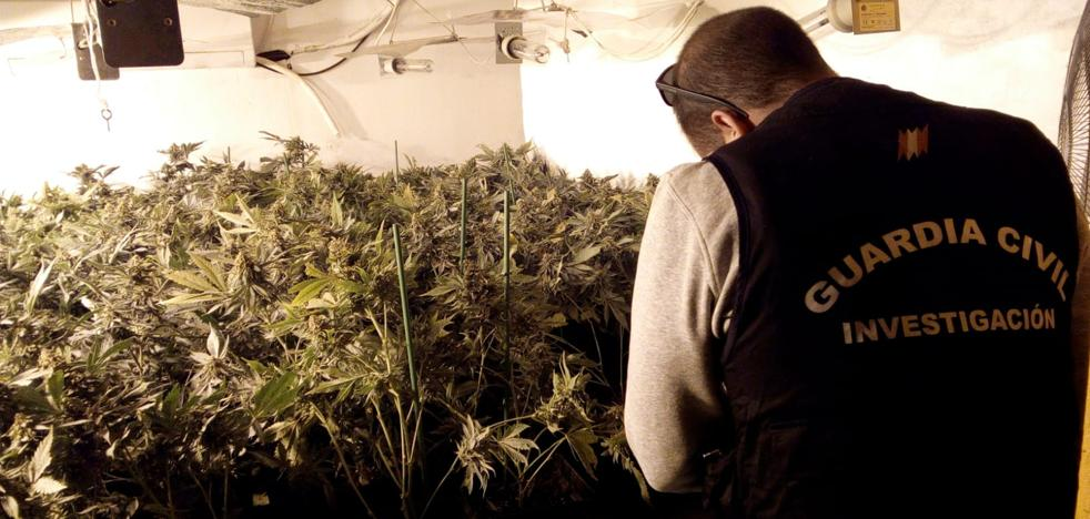 Intervenidas casi 2.500 plantas de marihuana en Loja y Tocón con 16 personas investigadas
