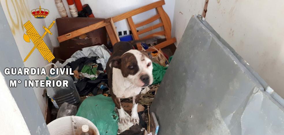 Rescatan varios perros abandonados en la azotea de un edificio en Roquetas de Mar
