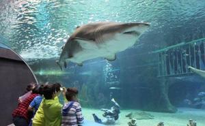 Cs registra una moción para que el acuario de Roquetas de Mar pase a llamarse Gabriel Cruz