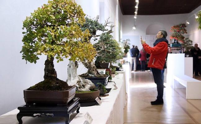 Naturaleza y olivos en miniatura