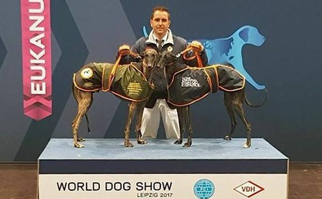 Una galga criada en Úbeda, campeona en el mayor acontecimiento canino del mundo