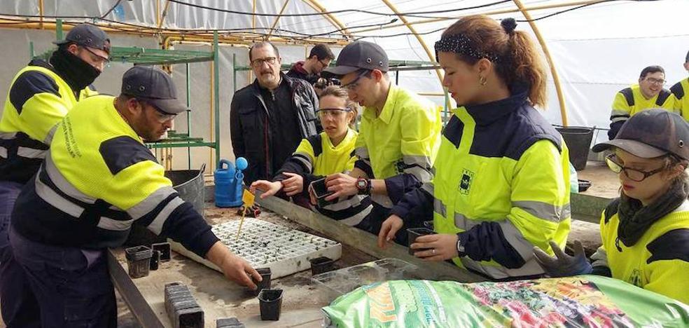 Ocho personas con diferentes grados de discapacidad trabajan en el vivero municipal de Úbeda