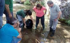 Liberan cinco mil ejemplares de trucha común en el río Guadalentín