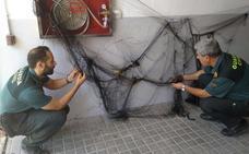 Investigados dos vecinos de Los Villares por cazar aves con artes prohibidas