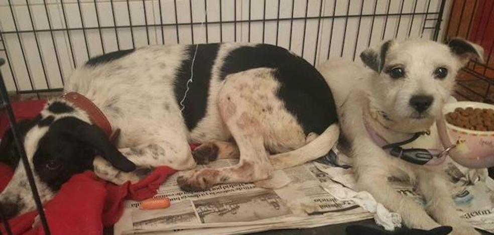 Los perros del matrimonio asesinado en Paterna, «aterrorizados» al llegar a la protectora