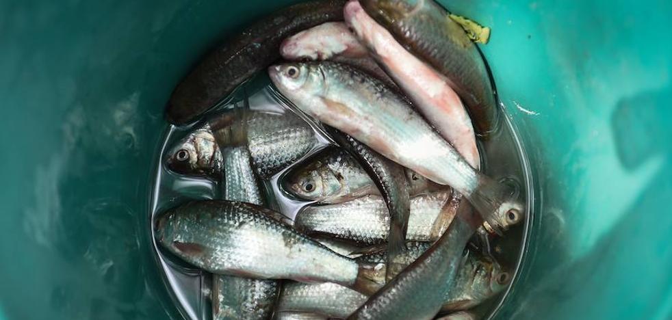 Alertan contra un peligroso plato de pescado que causa cáncer con comerlo una sola vez