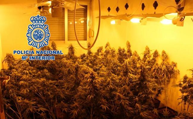 Desmantelan tres plantaciones 'indoor' de cannabis en Granada