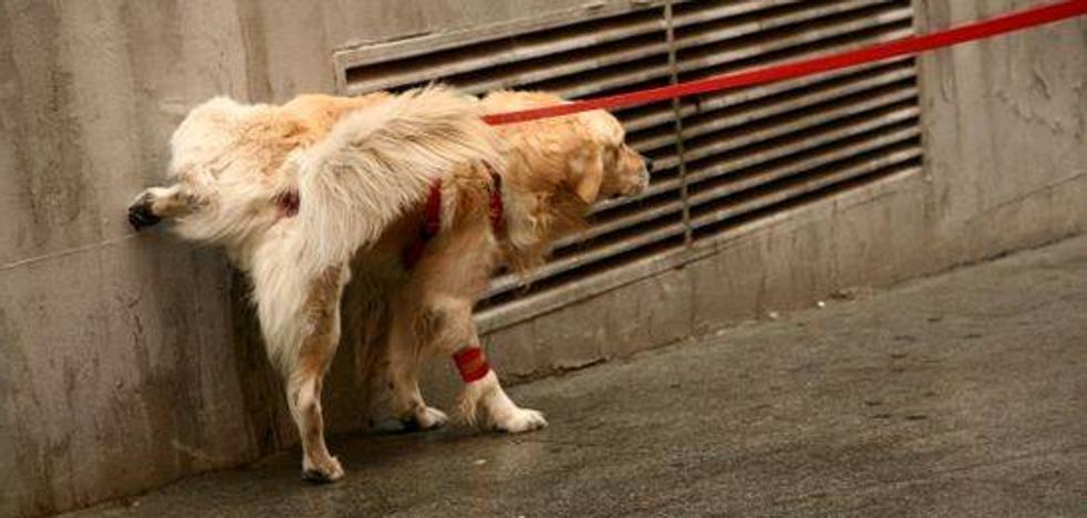 Multas de hasta 750 euros por no limpiar con agua los orines de los perros