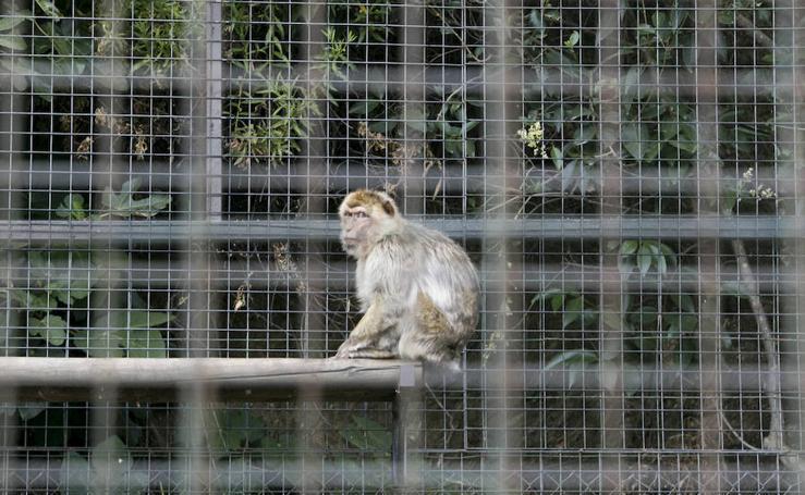 Los últimos animales de Peña Escrita esperan su reubicación