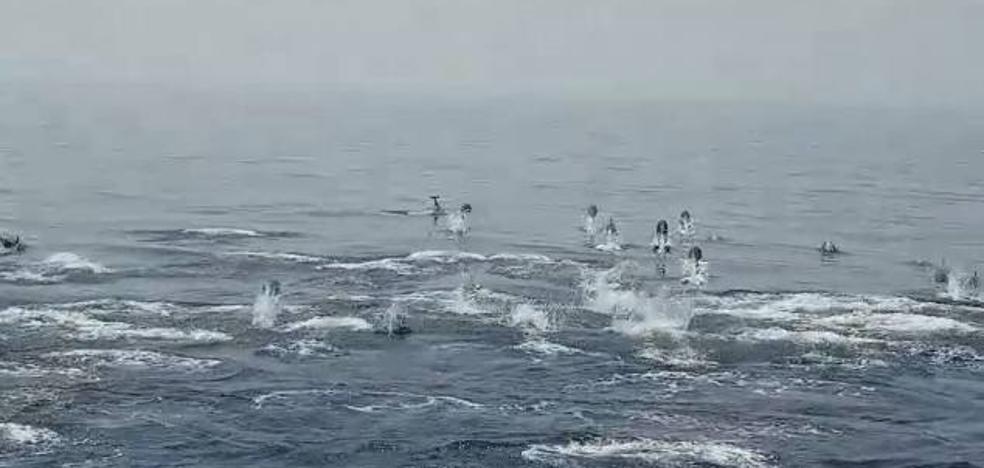 Espectacular: logran grabar a decenas de delfines saltando en Cabo de Gata