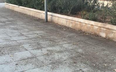 El PSOE pide una limpieza urgente para Zapillo, Ciudad Jardín y Vega