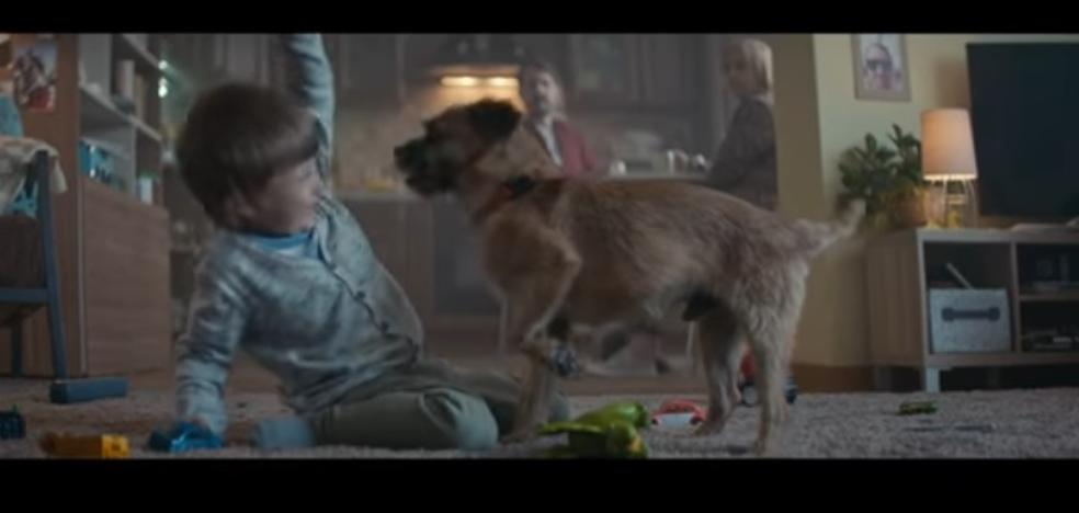 El bello anuncio viral que te convencerá para que no abandones a tu perro en verano