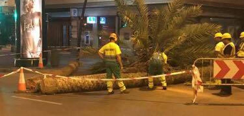 La tala de una palmera en el Paseo siembra la polémica en internet
