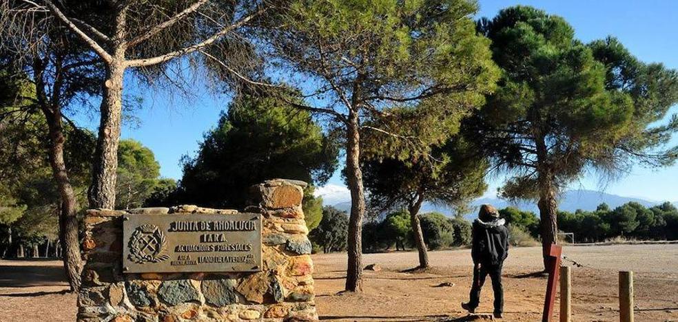 Estabilizado el incendio forestal declarado en paraje junto a Alhambra