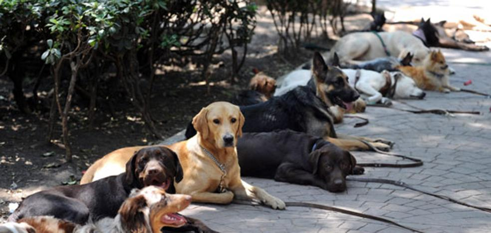 El Registro de Animales de Compañía contabiliza más de 230.000 mascotas en la provincia
