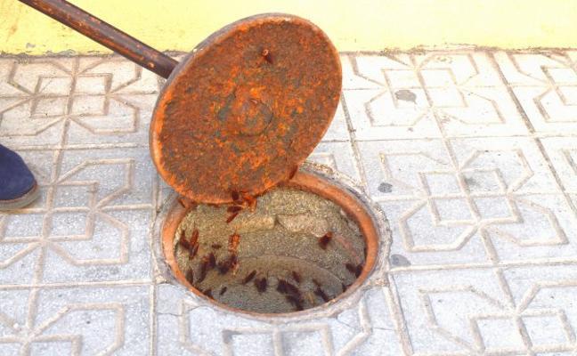 Las cucarachas campan a sus anchas por el centro de Granada