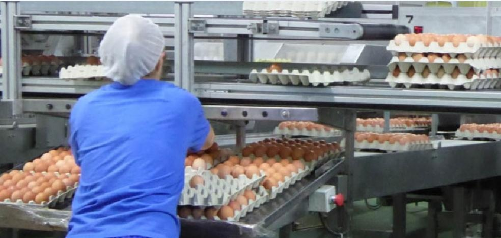 Los productores de España exportan más huevos debido a la crisis del fipronil en Europa