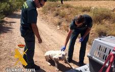 Rescatan un cachorro a punto de morir de inanición en Chirivel