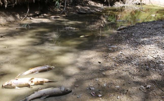 La CHG anuncia la retirada de los peces muertos en el cauce seco del Guadalbullón