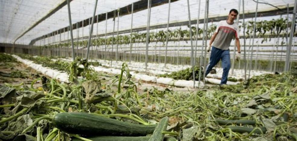 Una empresa almeriense, indemnizada por Hamburgo por acusarla en la crisis del pepino
