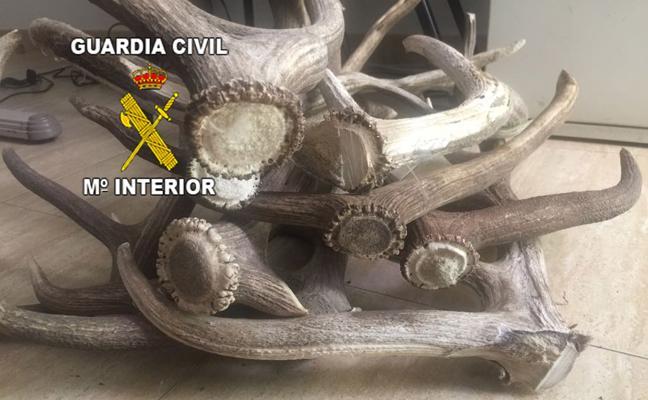 Detenidas tres personas especializadas en el robo de trofeos de caza