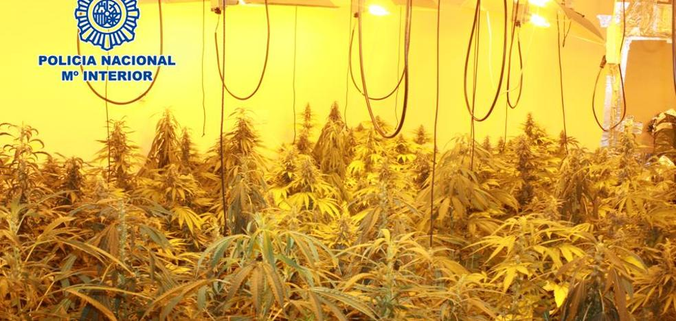 Un detenido y 614 plantas de marihuana intervenidas en una plantación en un chalet de Ogíjares